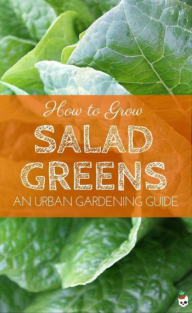 How To Grow Mixed Greens (Mesclun)