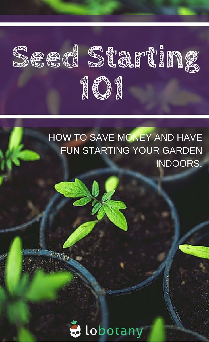 Seed Starting Indoors For Beginner Gardening