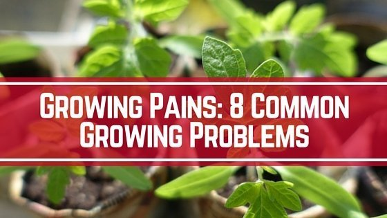 Growing Pains 8 Common Growing Problems