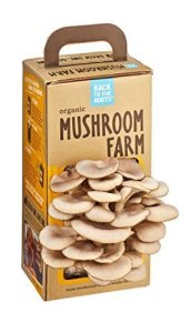 Back To The Roots Oyster Mushroom Kit 0