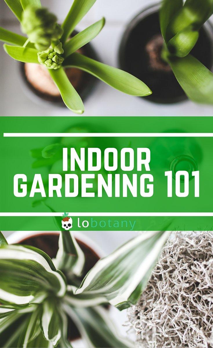 Indoor Gardening In Small Spaces