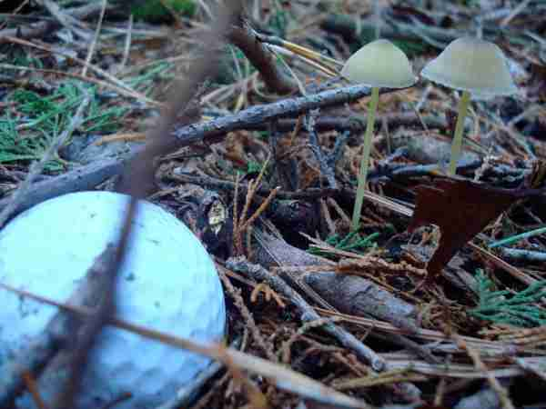 forest mushroom golf ball