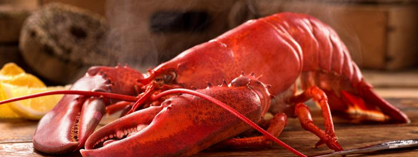 Cooked Maine Lobster is good for you