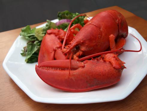 cooked maine lobster on a plate