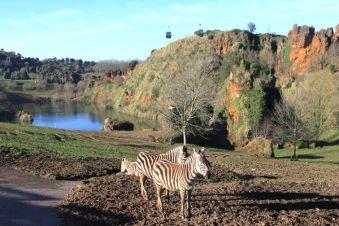 parque natural de cabarceno cebras