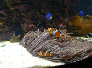 valencia con niños oceanografico 3