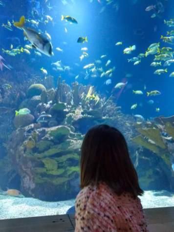 valencia con niños oceanografico 4