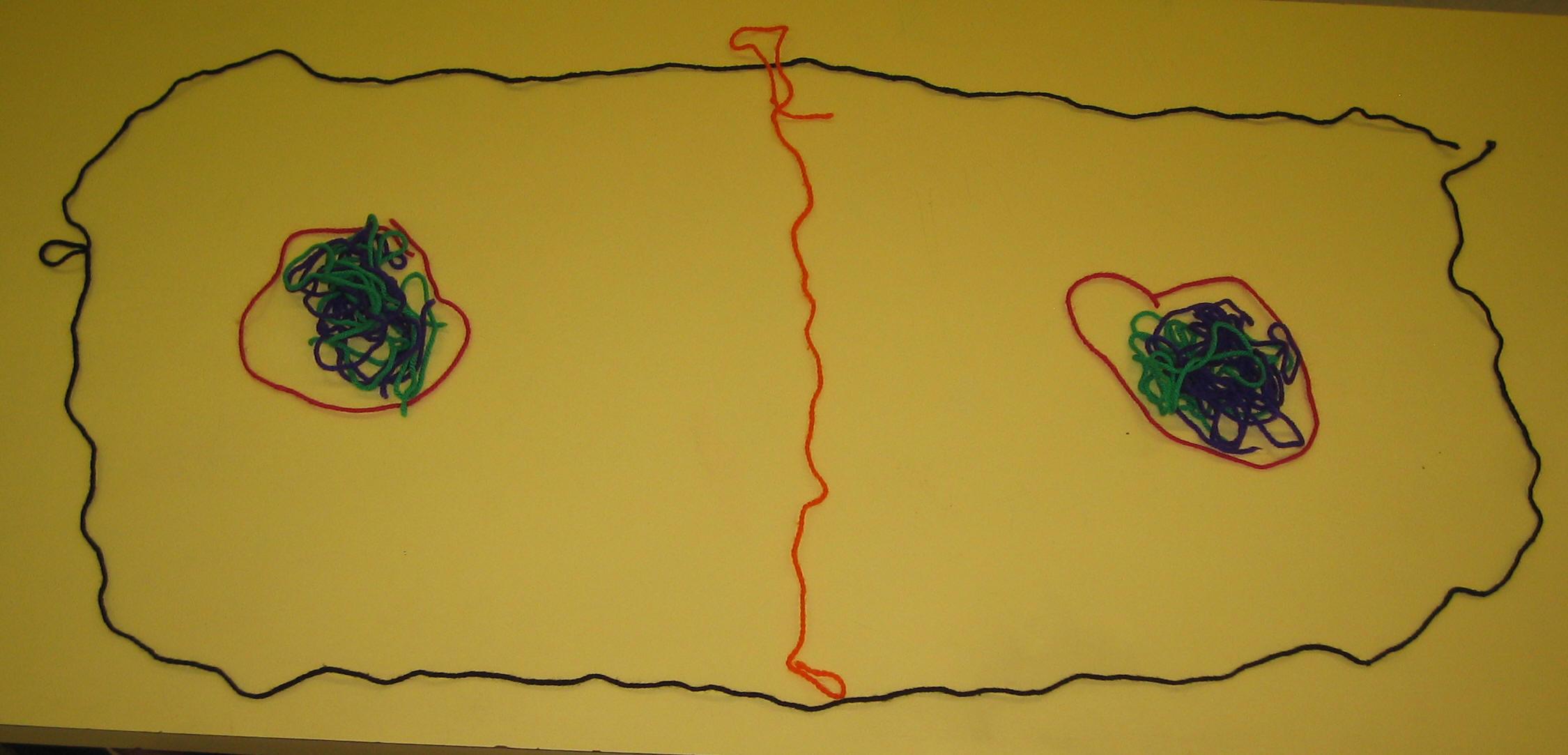 Yarn Mitosis