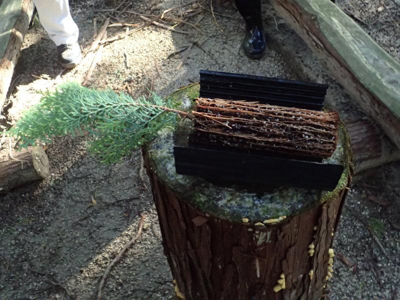 苗を育てる容器にリブが設けられ、リブにそって根が伸びるので絡まない。