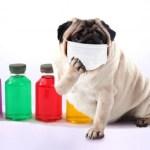 「花粉症の予防と対策について」