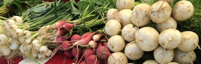 Onions, radishes, and turnips from Butter Hill Farm Lawrenceville Farmers Market/ Facebook