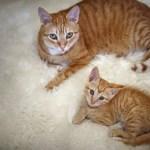 Mini Me | Cats