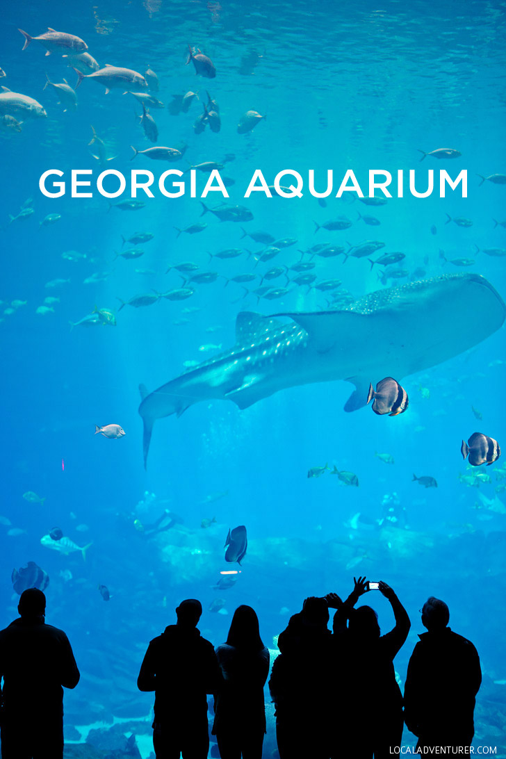 Atlanta Georgia Aquarium - Largest Aquarium in the Western Hemisphere // localadventurer.com