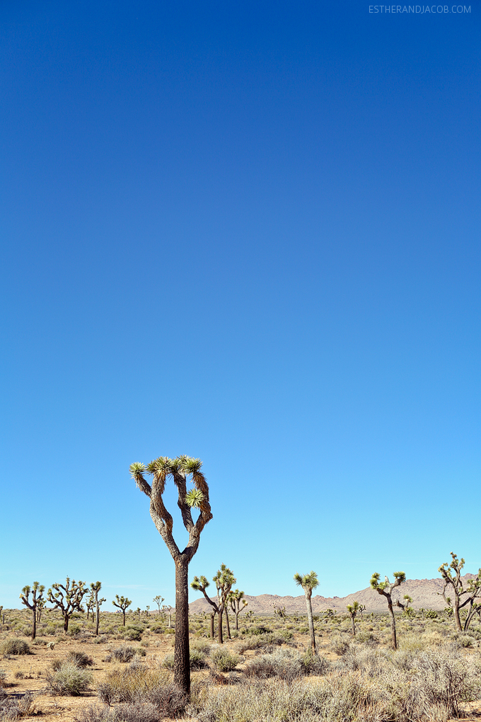 11 Amazing Things To Do In Joshua Tree National Park