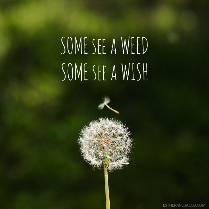 Some see a weed some see a wish quote | Dandelion images | Pictures of spring season | Why I Love Spring.