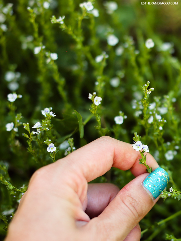 Teeny tiny spring flowers | Why I love spring | Pictures of spring season.
