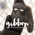 Singing with Gibbons at the Gibbon Conservation Center