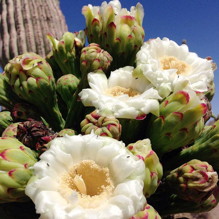 11 Beautiful Things to Do in Saguaro National Park Tucson AZ.