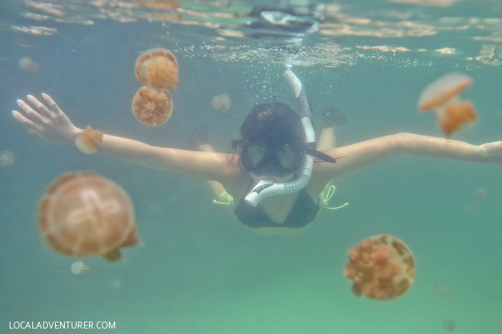 Swimming with Jellyfish that Don't Sting at Jellyfish Lake Kakaban Island - There are only two places in the world where you can do this! // localadventurer.com