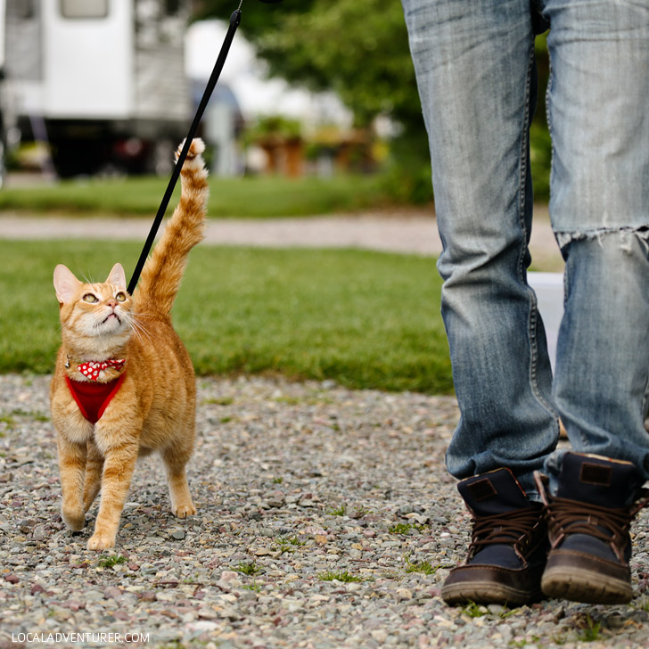 Tips for Traveling with Cats // localadventurer.com