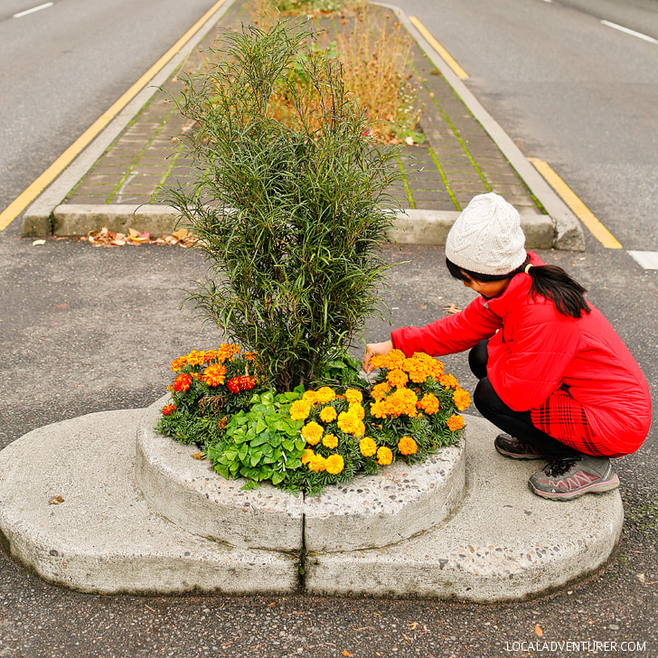 Smallest Park in the World - Mill Ends Park + 25 Best Instagram Spots in Portland Oregon // localadventurer.com