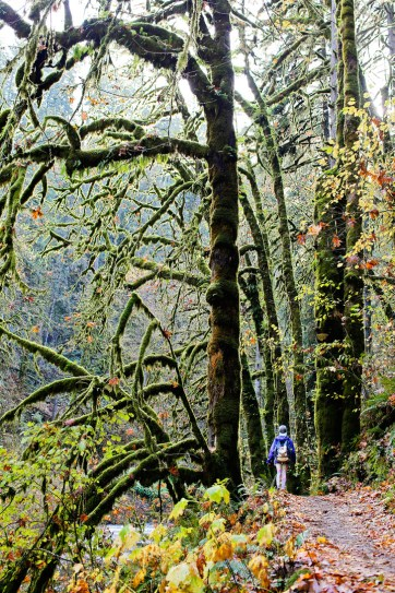 Silver Falls State Park Hikes Oregon // localadventurer.com