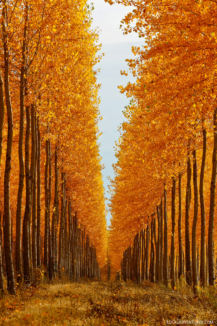 Boardman Tree Farm Oregon // localadventurer.com