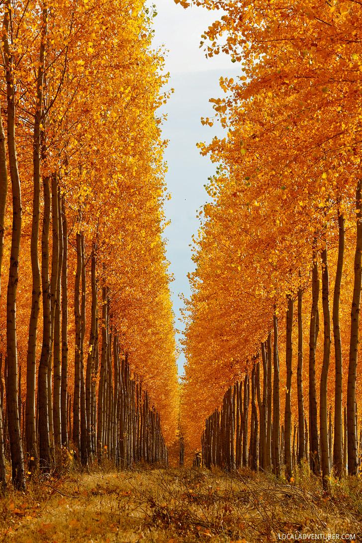 ... Boardman Tree Farm Oregon // Localadventurer.com