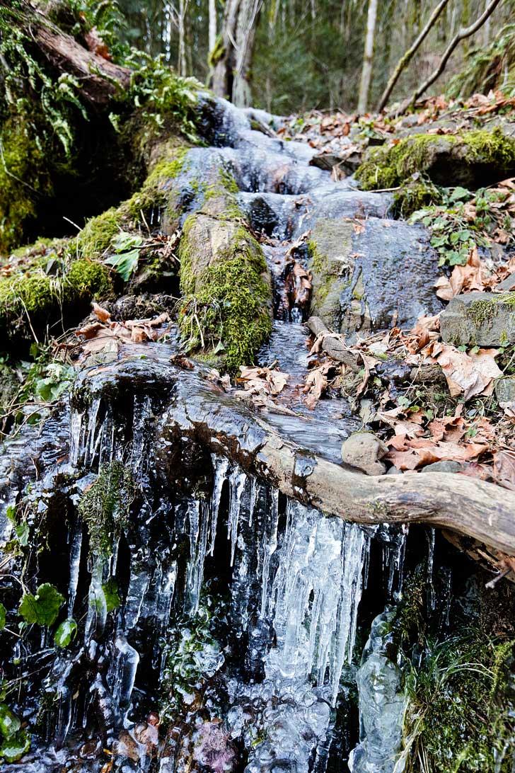 Latourell Falls Hike Easy Waterfall Hikes Near Portland