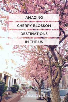Best Places to See Cherry Blossoms USA Edition // localadventurer.com