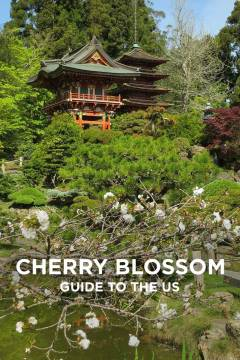 Ultimate Guide to Seeing Cherry Blossoms in the US // localadventurer.com