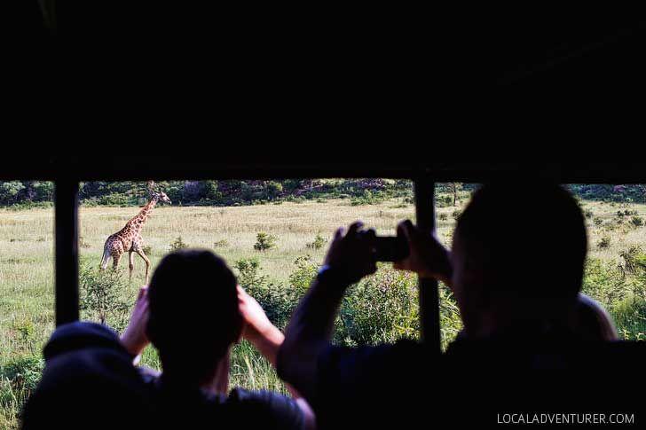 Go SAfari South Africa Safari to Pilanesberg National Park - an Amazing Day Trip from Johannesburg South Africa // localadventurer.com