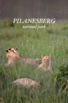 An Amazing Safari Day Trip to Pilanesberg National Park from Johannesburg South Africa // localadventurer.com
