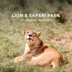 The Lion Park Johannesburg South Africa