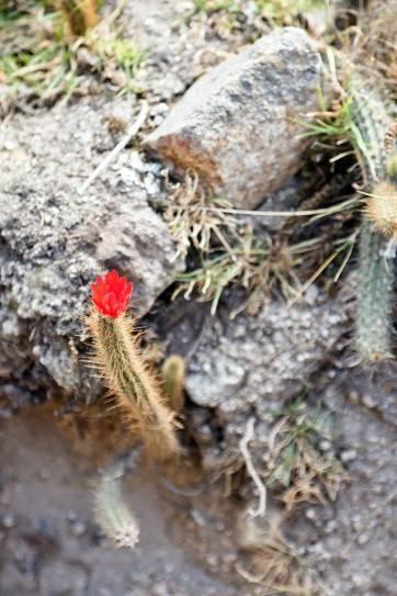 Flora on the Inca Trek // localadventurer.com