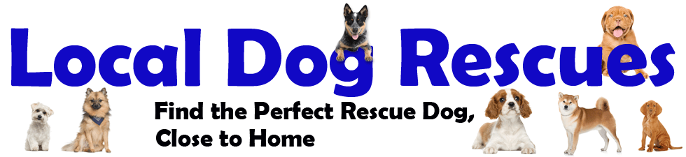Local Dog Rescues - Adopt a dog