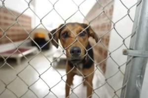 Mixed Breed Dog at the Shelter