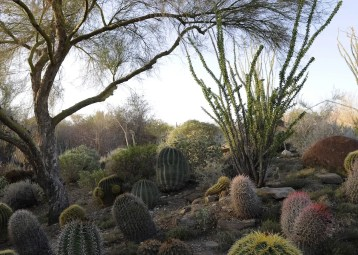 Gardens 4, The Living Desert