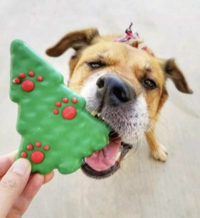 Pacific City Holiday_Cookie_@lexithepupski