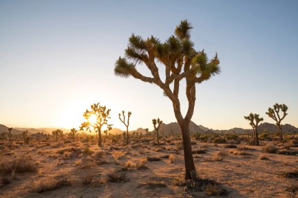 Photography By: Lance Gerber, Provided By: Greater Palm Springs CVB