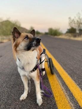 Frida_Animal Wellness OC_IMG_9791