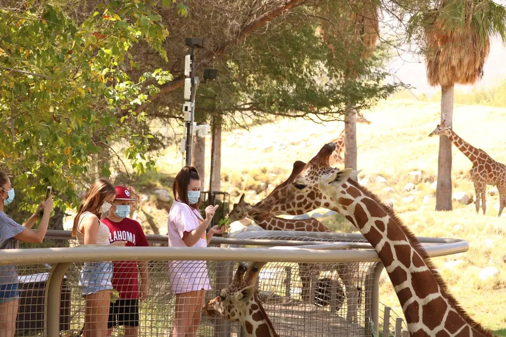 Photography Provided By: The Living Desert Zoo and Gardens