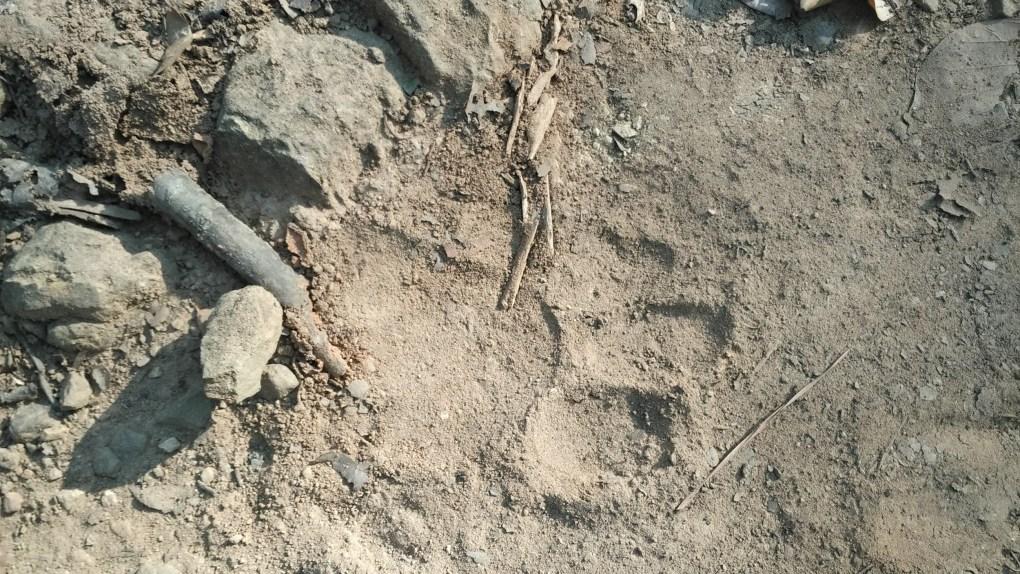 Jim Corbett National Park adventure pugmark