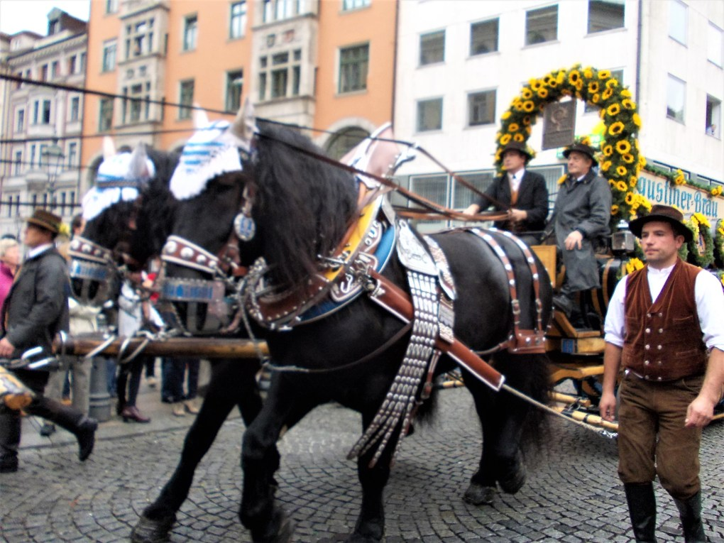 Oktoberfest parade carriage augustiner brau