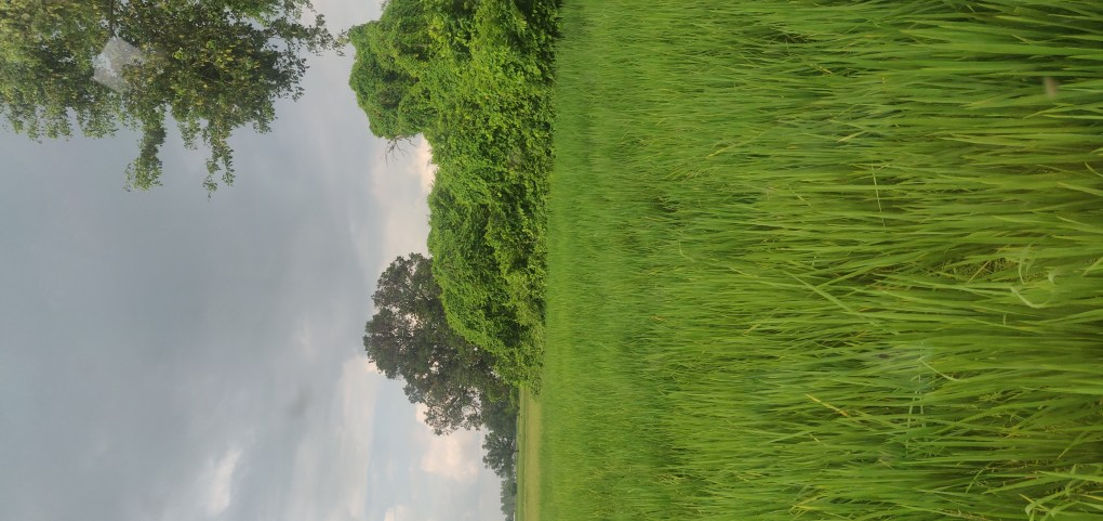 belpar village gorakhpur view of fields