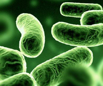 bacteria in soil