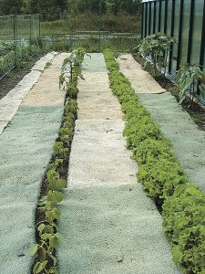 Recycled jute-backed carpet works as an effective weed barrier.