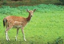 Deer repellents that work