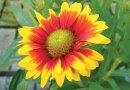 Easy-care Perennials