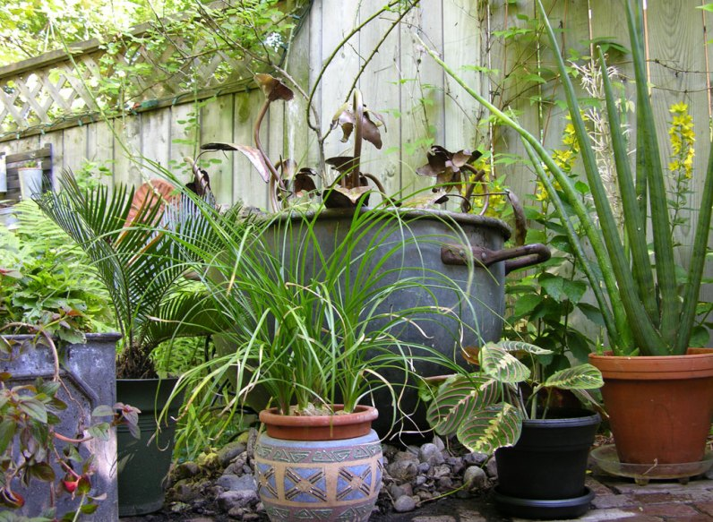 A cluster of tropicals on the patio.